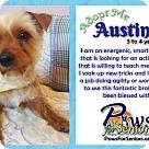 Adopt A Pet :: Austin