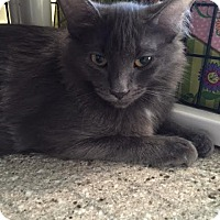 Adopt A Pet :: Kathie the Barbarian - Chicago, IL