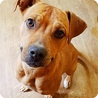 Adopt A Pet :: Crystal - Kingston, TN