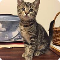 Adopt A Pet :: Maya - Whitehall, PA