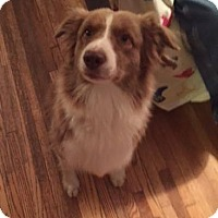 Adopt A Pet :: Baily - Minneapolis, MN