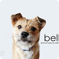 Adopt A Pet :: Bella - Sherman Oaks, CA