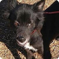 Adopt A Pet :: Pinky - Greenville, NC