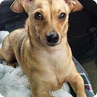 Adopt A Pet :: Walter - Gallatin, TN
