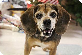Beagle Mix Dog for adoption in Elyria, Ohio - Diamond