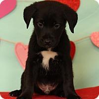 Adopt A Pet :: Devin - Waldorf, MD