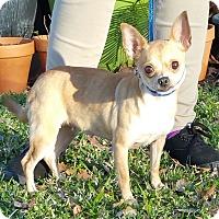 Adopt A Pet :: CARMELA - Houston, TX
