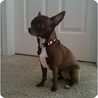 Adopt A Pet :: Maggie - Hilliard, OH