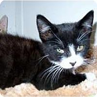 Adopt A Pet :: Snugaboo - Shelton, WA