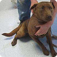 Adopt A Pet :: Otis**PENDING!** - Chicago, IL