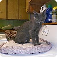 Adopt A Pet :: Greta - Dover, OH