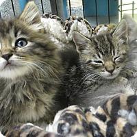 Adopt A Pet :: Jordan & Kyle - Brockton, MA