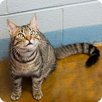 Adopt A Pet :: Katie - Carencro, LA