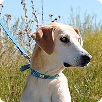 Adopt A Pet :: Abner - Weatherford, TX