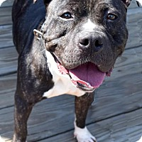 Adopt A Pet :: Frogger D-63499 *Pooch with Perks* - Westampton, NJ