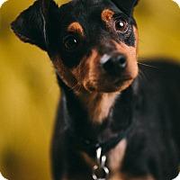 Adopt A Pet :: Mickey - Portland, OR