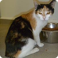 Adopt A Pet :: Rosie - Hamburg, NY