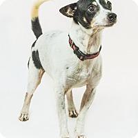 Adopt A Pet :: Moses - Yelm, WA