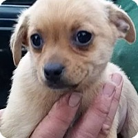 Adopt A Pet :: Monday - Gainesville, FL