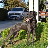 Adopt A Pet :: Pepper - Clovis, CA