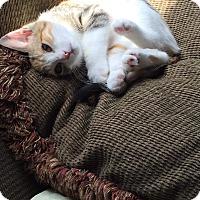 Adopt A Pet :: Jemma - Covington, KY