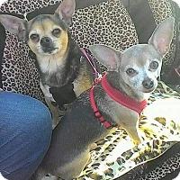 Adopt A Pet :: Mobley & Little bear - Hagerstown, MD