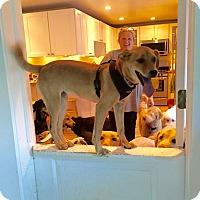 Adopt A Pet :: Jackie - Sagaponack, NY