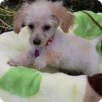 Adopt A Pet :: FRANKIE - Newport Beach, CA