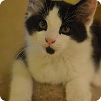 Adopt A Pet :: Jerry - Madison, NJ