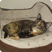 Adopt A Pet :: Amazon - Ridgway, CO
