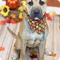 Adopt A Pet :: Max - Philadelphia, PA