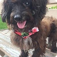 Adopt A Pet :: Rasta - Weston, FL