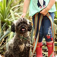 Adopt A Pet :: Howie - Auburn, CA