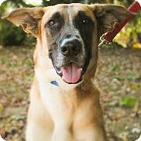 Adopt A Pet :: Barron - Berkeley Heights, NJ
