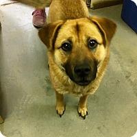 Adopt A Pet :: Livvy - Stanton, MI