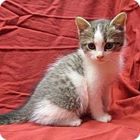 Adopt A Pet :: 16-c12-008 Misteltoe - Fayetteville, TN