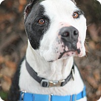 Mixed Breed (Large) Mix Dog for adoption in Goleta, California - Courage