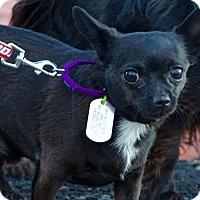 Adopt A Pet :: Peanut - Scituate, MA