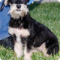 Adopt A Pet :: Lupita - Renton, WA