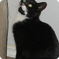 Adopt A Pet :: Jackie O - Toronto, ON