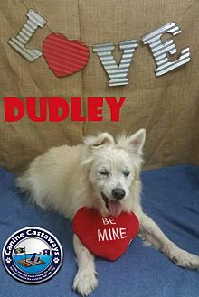 Terrier (Unknown Type, Medium)/Pomeranian Mix Puppy for adoption in Arcadia, Florida - Dudley