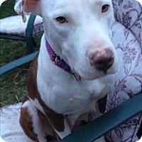 Adopt A Pet :: Trixie - Dayton, OH