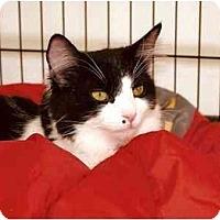 Adopt A Pet :: Marley - El Cajon, CA