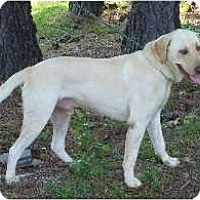 Adopt A Pet :: Duke - Cumming, GA