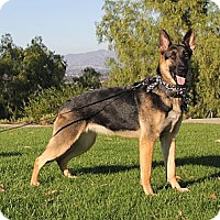 Adopt A Pet :: Faith - Laguna Niguel, CA