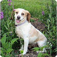 Adopt A Pet :: Daphne - Novi, MI