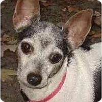 Adopt A Pet :: Julie Bug - Jacksonville, FL
