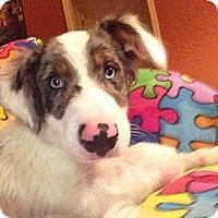Adopt A Pet :: Patches - Homewood, AL