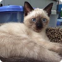 Adopt A Pet :: Sky Blue - Long Beach, NY