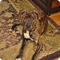 Adopt A Pet :: Duncan - Reisterstown, MD